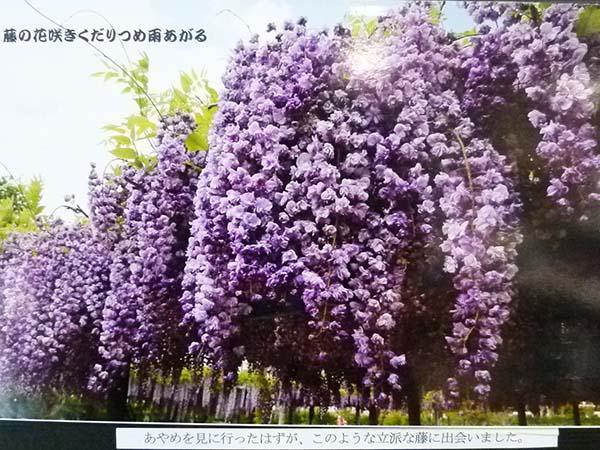 山笑う1-7