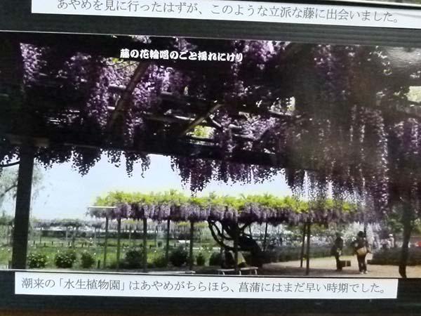 山笑う1-8