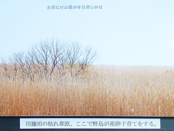春浅し04
