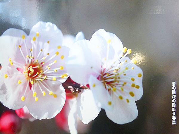 春浅し06