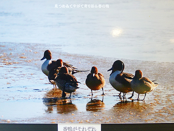 春浅し08