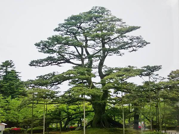 夏初め10