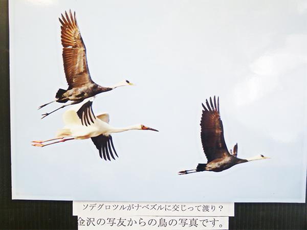 軽井沢の晩秋06